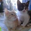 kittens_adopt